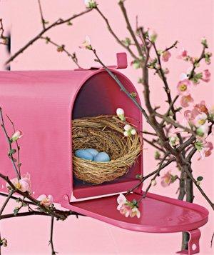 birds nest in mailbox